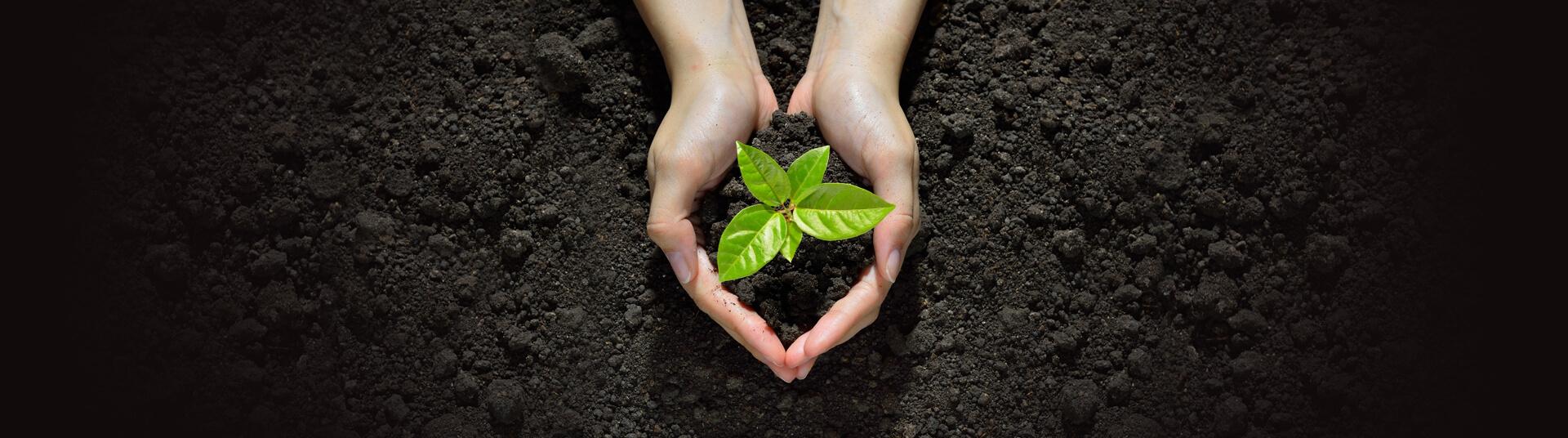 Buy a Printer, Plant a Tree